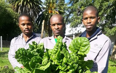 AgroEcology students are changing how Kayamandi eats