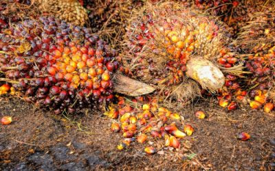 What to do about palm oil – many sides to a slippery coin